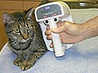 A microchipped cat