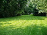 A manicured lawn
