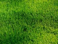 A lush, green lawn.