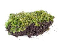 a clump of moss on a white background.
