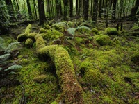A fallen log and forest floor covered in moss.