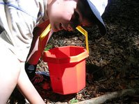 Young man picking mushrooms and placing them into a red bucket.