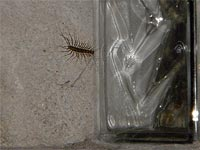 A photo of a centipede next to a block window.