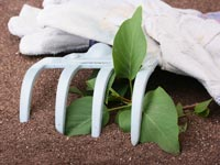 A photo of white gardening gloves, a small white hand rake, and a plant cutting.