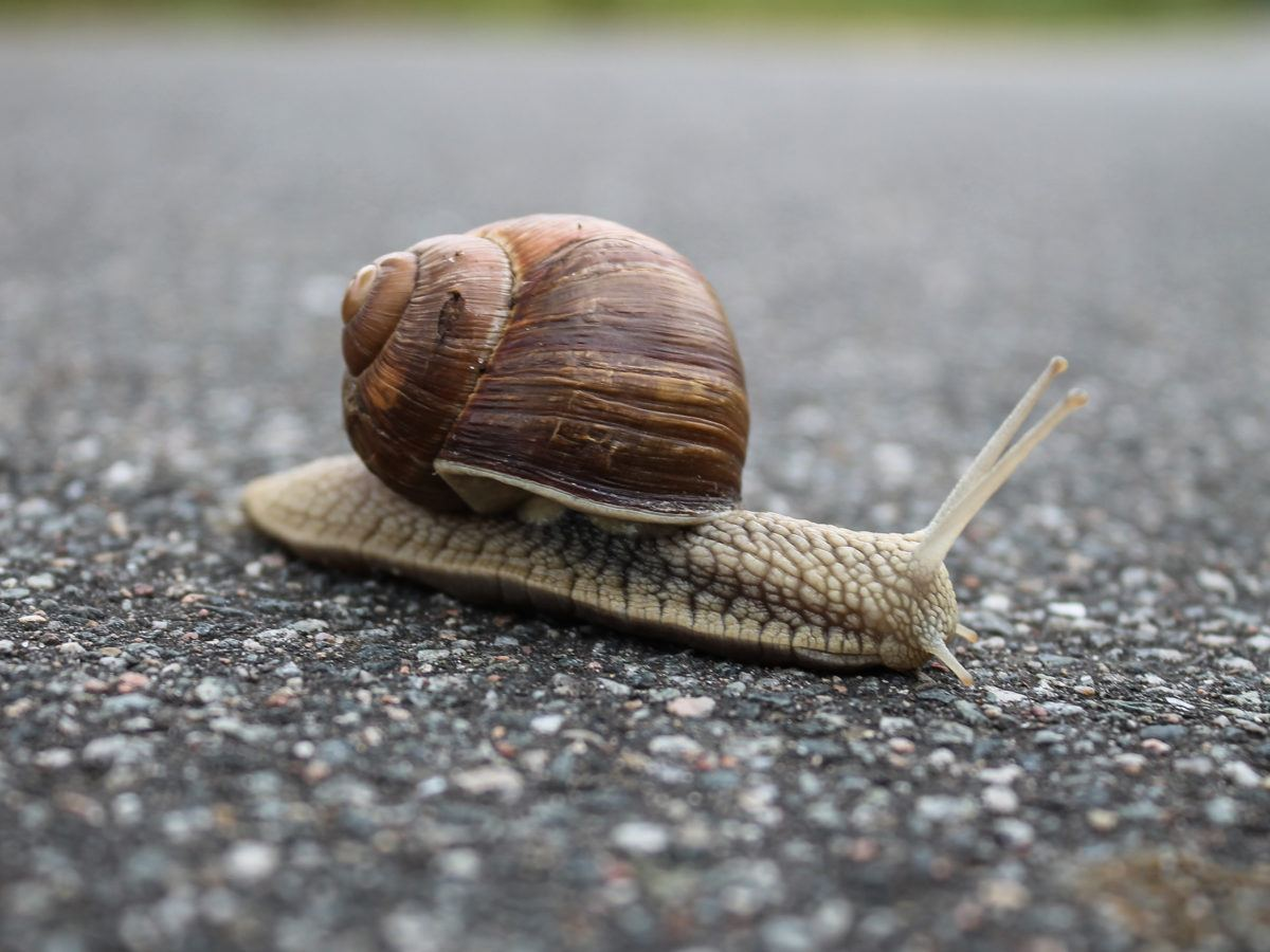 How To Get Rid Of Snails Getridofthings Com