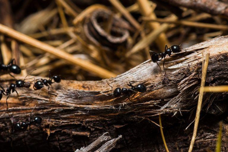 how to get rid of black ants rh getridofthings com Get Rid Ants Your House how to get rid of tiny black ants in the kitchen