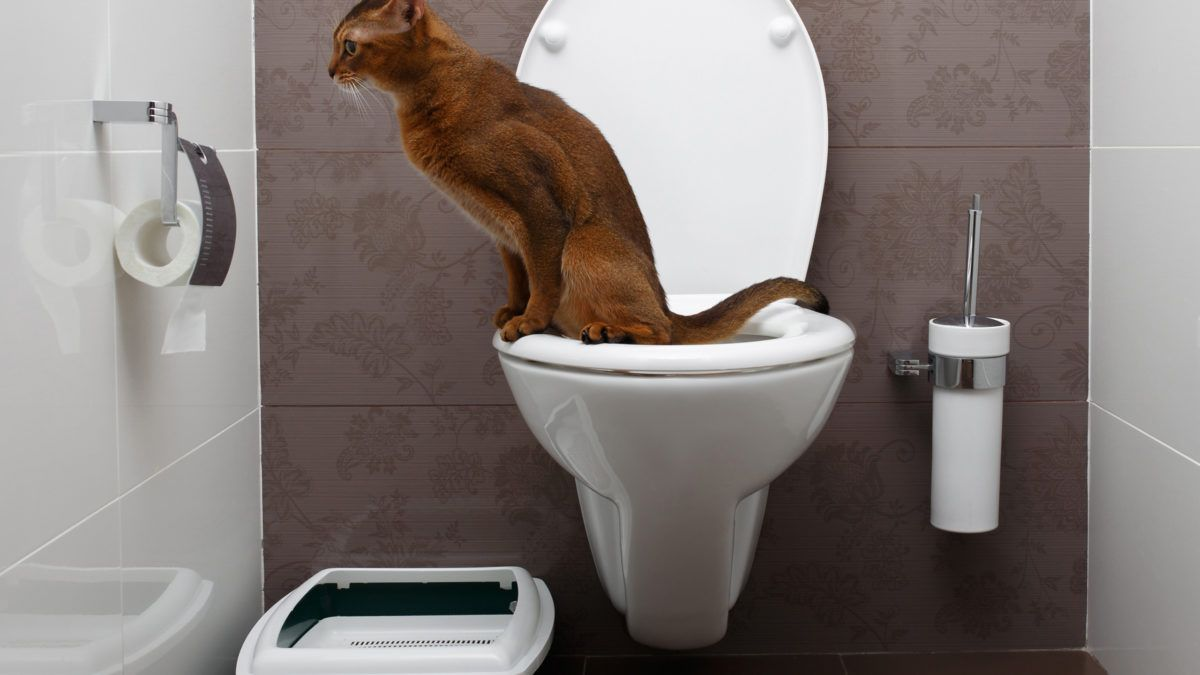 How to Get Rid of Cat Urine