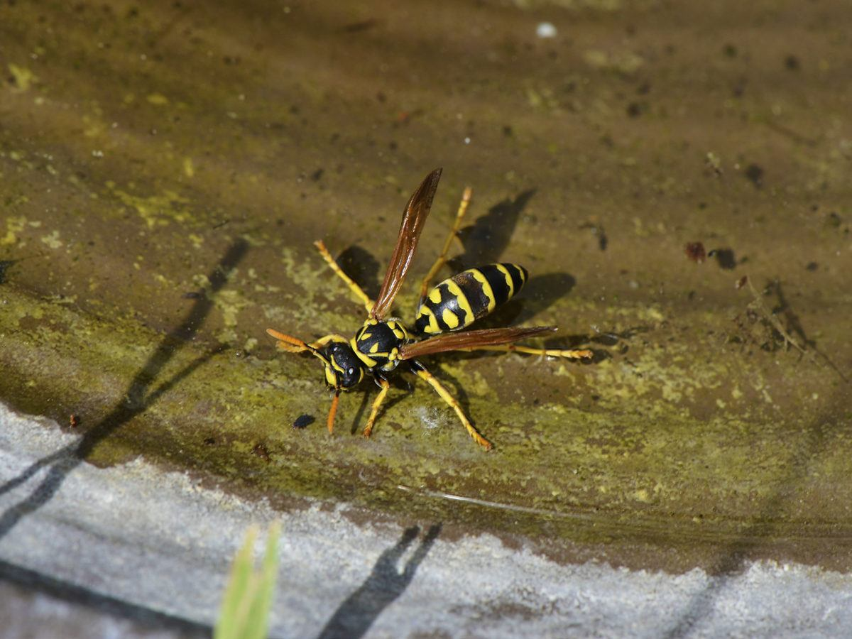 Sevin Dust Kills Bees Bindu Bhatia Astrology