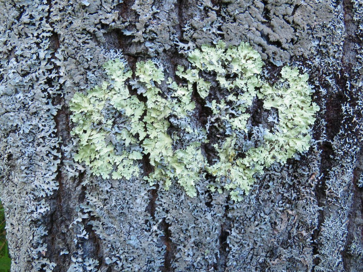 How To Get Rid Of Tree Fungus Getridofthings Com