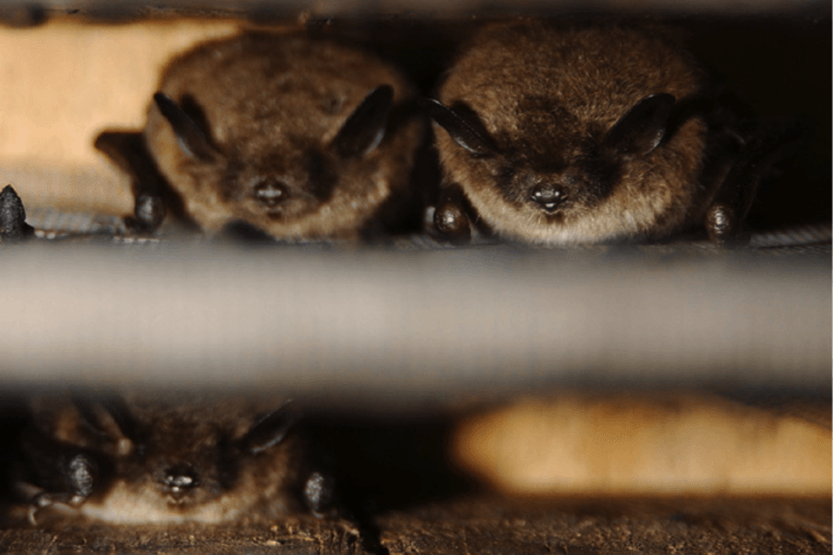 bats in the house