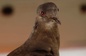 pigeon spike